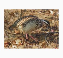 Bospatrys / Crested Francolin One Piece - Short Sleeve