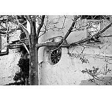 Santa Fe Adobe and Tree Photographic Print