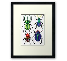 Beetles Framed Print