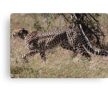 Cheetah on the Hunt Canvas Print