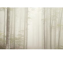 Fog in the park of Mount Amiata, Tuscany Photographic Print