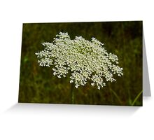 The Edible Queen Anne's Lace Greeting Card
