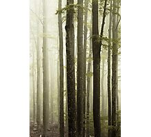 Fog and forest Photographic Print