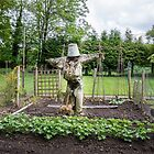 Scarecrow by Sue Martin