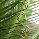 curly fern by Floralynne