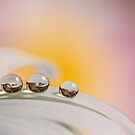 Three drops by Veikko  Suikkanen