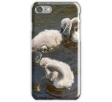 Baby Cygnets iPhone Case/Skin