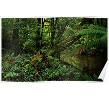 Rainforest in Tasmania Poster