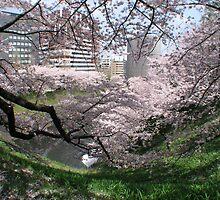 Springtime In Tokyo by davidandmandy
