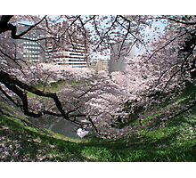 Springtime In Tokyo Photographic Print