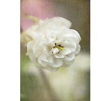 Columbine white Photographic Print