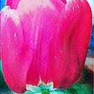 pink Tulip with texture by RosiLorz