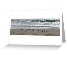 Feathering Heights Greeting Card