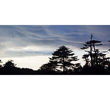 Shimla Range India - Ancient Forest Photographic Print