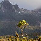 Golden Tree by bluetaipan