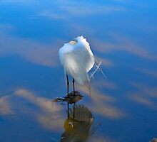Reflections Blue Heron by HanieBCreations