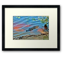 Good Morning Alligator Framed Print