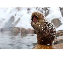 Snow monkey Photographic Print
