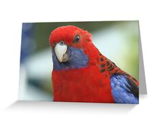 Ozzy Rosella Greeting Card
