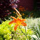 WHO LOVES LILIES? by Pauline Evans