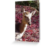 Japanese Doe Greeting Card