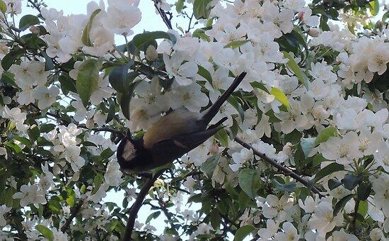 Nimble Musician (Bird in Blossom) by CreativeEm