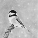 Winter Bird Chickadee by artddicted