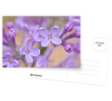 Lilac Macro, As Is Postcards