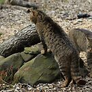 Scottish wildcats by weecoughimages
