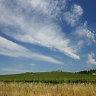 ON THE ROAD TO SONOMA by fsmitchellphoto