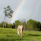 Palomino Paint Horse and Rainbow Artwork by Val  Brackenridge