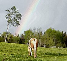 Palomino Paint Horse and Rainbow Artwork by Val  Brackenridge