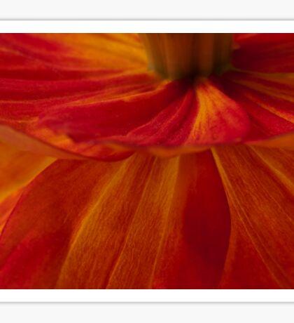 Orange Zinnia Flower Petals - Macro  Sticker