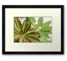 Lupin leaves Framed Print
