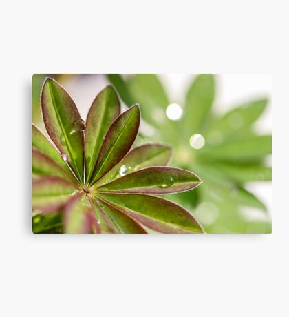 Lupin leaves Canvas Print