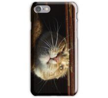Silly cat iPhone Case/Skin