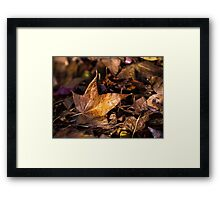 Death of Autumn Framed Print