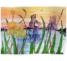 Irises by the lake Poster