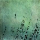 Reeds by Shane Viper