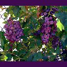 Grapes Pillow and Tote Bag by Shulie1