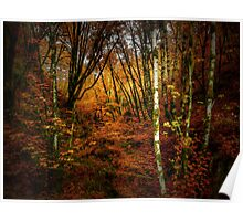 Fall Delight ~ Red Alder Trees ~ Poster