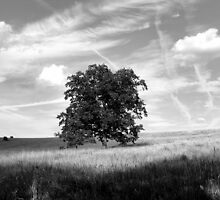 Tree of Life in B/W by vigor