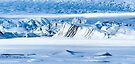 Glacier Close up by Svetlana Sewell