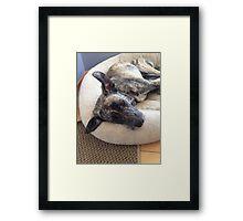 cute sad puppy brindle dog Framed Print