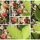 Wild Strawberries by blacknight