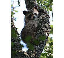 Texas Tree Hugger Photographic Print
