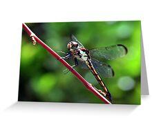Everglades Dragon Greeting Card