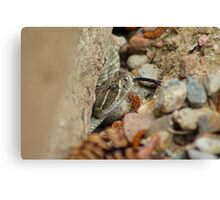 diamondback rattlesnack sticking its tongue out Canvas Print