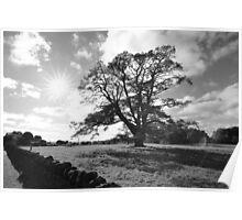 Rural Sunshine Poster