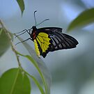 Butterfly 14 by Sunshinesmile83